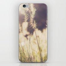 Golden Grass iPhone & iPod Skin