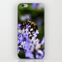Bee On Lavander iPhone & iPod Skin
