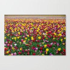 Fields of Color II, Woodburn Tulip Festival Canvas Print