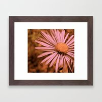 Pink as a Petal Framed Art Print
