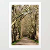 Spring Tunnel Art Print