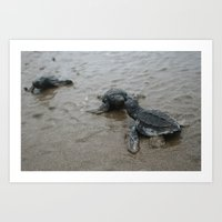 baby sea turtle kisses Art Print