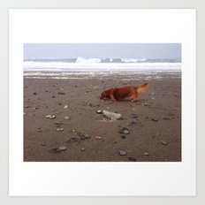 Dachsund on Beach Art Print