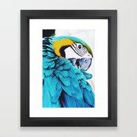 Parrot Life Framed Art Print