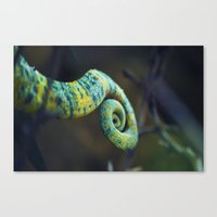 Camelon Tail Canvas Print