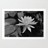 b&w water flower Art Print