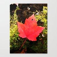 Fall Leaf Canvas Print