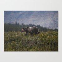 Gizzly Bear Canvas Print