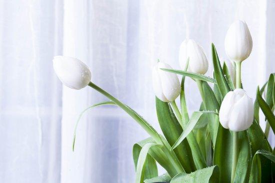 Tulips in White Art Print