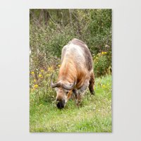 The Endangered Takin Canvas Print