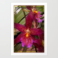 Rose Madder Orchids Art Print