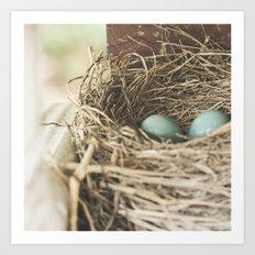 Robin Eggs in nest Art Print
