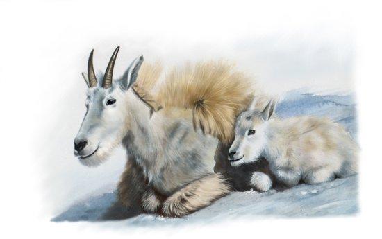 goat snow and cub Art Print