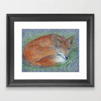 A Sleepy Fox  Framed Art Print