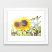 August Sunflower Framed Art Print
