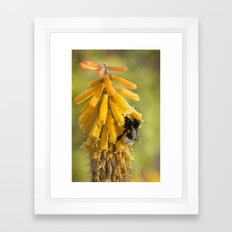 Happy Bee Framed Art Print