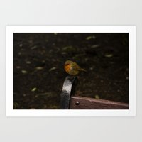 Resting Robin Art Print