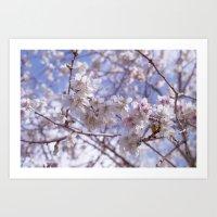 Blossom, Bloomin Blossom… Art Print