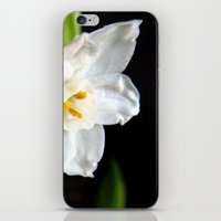 Paperwhites  iPhone & iPod Skin