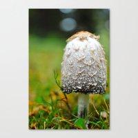 Fluffy mushroom Canvas Print