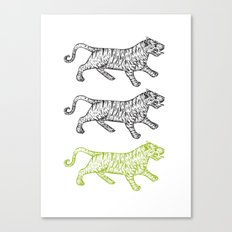 Three Tigers Canvas Print
