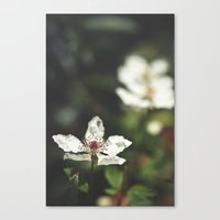 Sweet, Sweet Lies Canvas Print