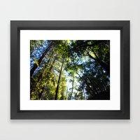 Santa Cruz Big Trees Framed Art Print