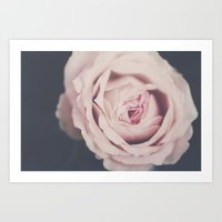 French Rose Art Print