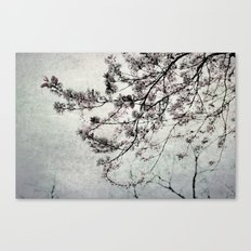 clouds of blossoms 2 Canvas Print