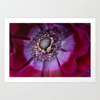 Anemone Coronaria - Macr… Art Print