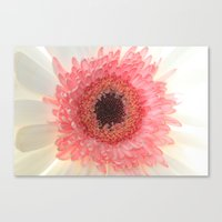 What A Peach Canvas Print