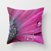 Purple Osteospermum Macro Throw Pillow