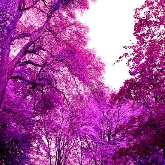 purple trees II Art Print