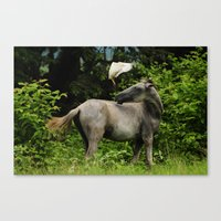 The Horse and the Bird Canvas Print