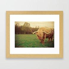 Scottish Highland Steer … Framed Art Print