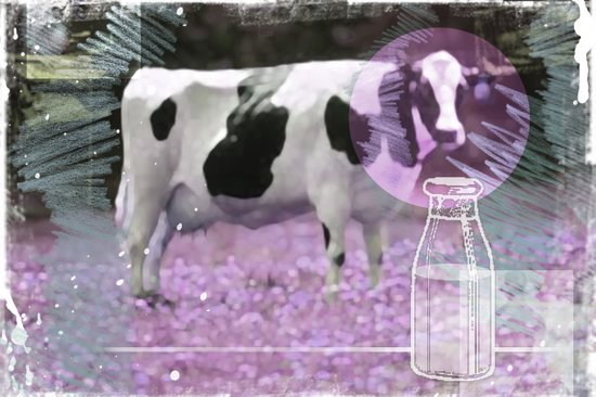 Milk comes from a bottle Canvas Print