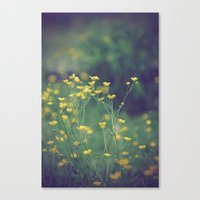 Buttercups  Canvas Print