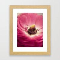 Ranunculus heart Framed Art Print