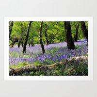Bluebell Wood. Art Print