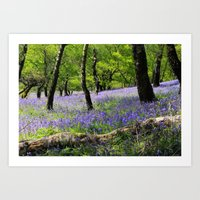 Bluebell Wood. Art Print