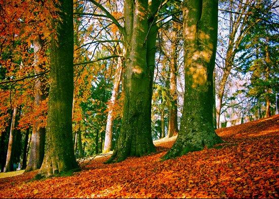 Autumn park hill Art Print