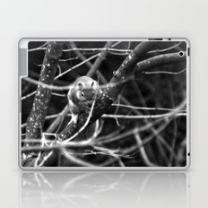 Squirrel in Black and White Laptop & iPad Skin