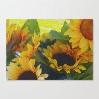 California Sunflowers Canvas Print