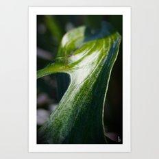 Staghorn Fern I Art Print