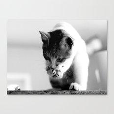 CAT OR SQUIRREL Canvas Print
