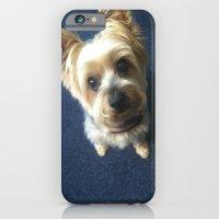 Yorkie iPhone 6 Slim Case