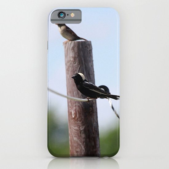 Bobolinks iPhone & iPod Case