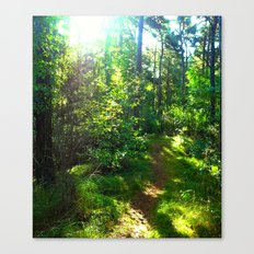 Sunshine Forest II Canvas Print