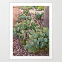 Prickly Pear Cactus Ariz… Art Print
