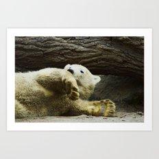 Young Pole Bear  Art Print